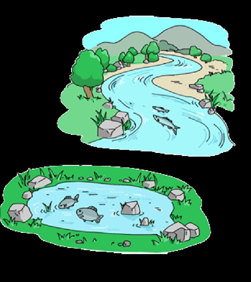 池の魚、川の魚